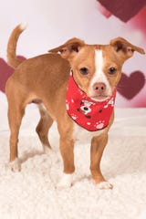 If you are interested in learning more about Elliot, please email debbie@azfriends.org.