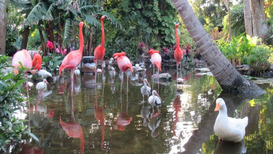 Flamingos are the stars of the new FlamCam at Everglades Wonder Gardens in Bonita Springs.