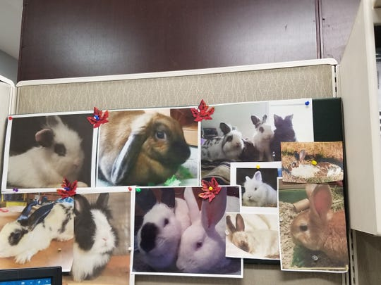 Angie Page, a repeat Bunny Brigade SC adopter, keeps photos of her rabbits at her desk at work at McGowan Hood & Felder law firm in Greenville.