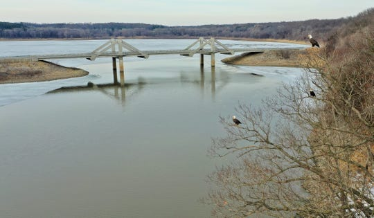 Three bald eagles perched over Coralville Lake keep a sharp eye on Mehaffey Bridge in this exceptional photo by Randy Miller of North Liberty, who specializes in drone photography. The bridge design is similar to that of a suspension bridge, but with the supporting cables encased in concrete.