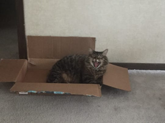 Katy the cat yawns from her home office cubicle when I ask her if she plans to do any work.