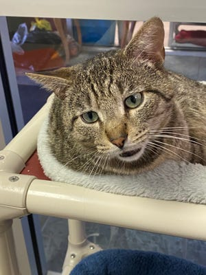 Chaco Taco is still at the Oshkosh Area Humane Society waiting for his forever home.