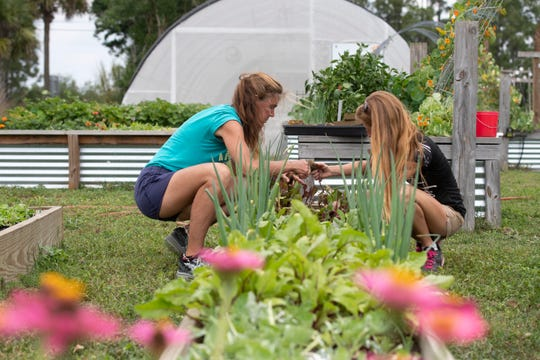 "Volunteer Lisa Sawtelle (left), of Stuart, and House of Hope production farm supervisor Kayla Sinotte plant beets in a raised bed used for root vegetables Thursday, April 9, 2020, at the farm in Palm City. In a single week, the nonprofit provides an average of 400 heads of lettuce, bok choy, tat son, kale, arugula, Swiss chard, mustard greens, green onions, spinach and more to their clients. ""I'm being very cautious,"" Sinotte said of food production in the time of coronavirus. ""(There is) the least amount of hands touching the produce as possible."""