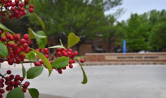 The bright red berries of a holly add a burst of color at Midwestern State University.