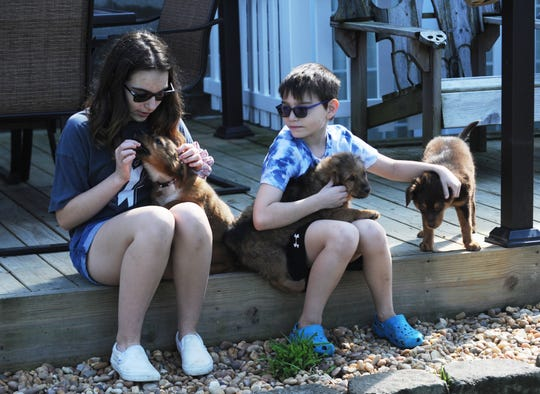 Kaidence (left) and Damon Burkett play with puppies the family is fostering from the Animal Shelter Society. Their mother and board president Lisa Burkett is asking others to help foster animals during the coronavirus pandemic.