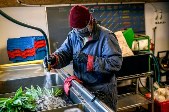 Rebecca Titus washes vegetables at Titus Farms on Thursday, April 9, 2020, in Leslie. When the coronavirus outbreak started, the farm set up direct sales through its online store.