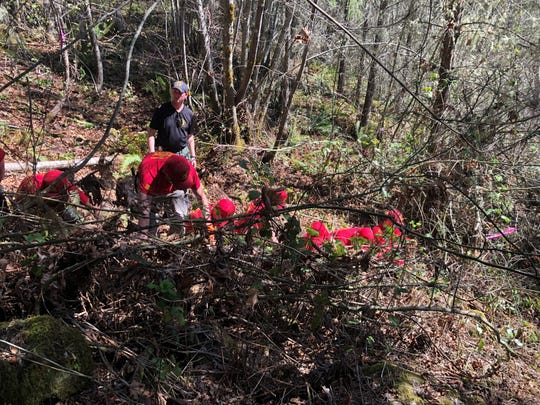 A search team clears brush near where human remains were found on Weyerhaeuser land off of Upper Calapooia Drive south of Sweet Home.