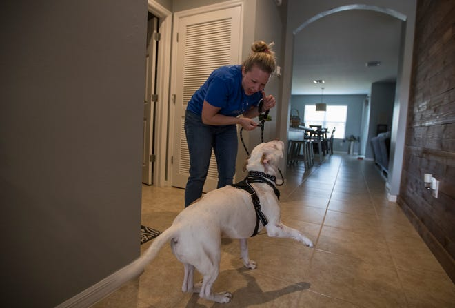 Cape Coral resident Ellen Kulesa prepares to take her rescued dog Gabriel for a walk.