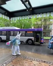 WeGo bus driver sings 'My Girl' to the Easter Bunny outside the Hermitage Hotel