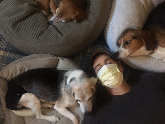 3 beagles, 2 mornings and realistic expectations: A coronavirus work-at-home tip sheet