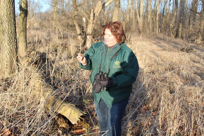 Debbie Haubert, naturalist with the Sandusky County Park District, stops near one of River Cliff Park's trails in February. The park district plans to plant native wildflowers and prairie grass at the park this year as part of an overall restoration plan.