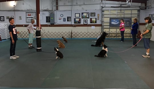 Group sit drills are integral parts of beginner obedience classes at ABC4K9 in North Fort Myers.