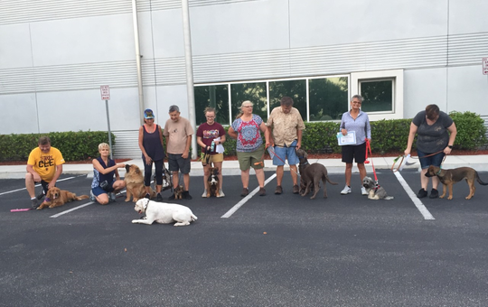 """A white boxer (foreground) properly performs a """"down stay"""" during a recent Dog Obedience Club of Lee County class in the parking lot of Cape Coral City Hall."""
