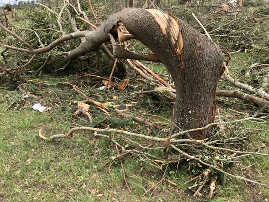 The sheer force of a tornado that hit southeastern Lawrence County on Easter Sunday 2020 bent pine trees into corkscrew-like positions.