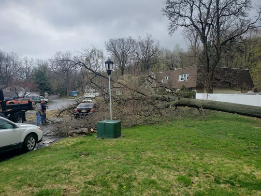 A Honda was able to drive away after a tree fell in the City of Beacon in the area of Roundtree Court on Monday, April 13, 2020.