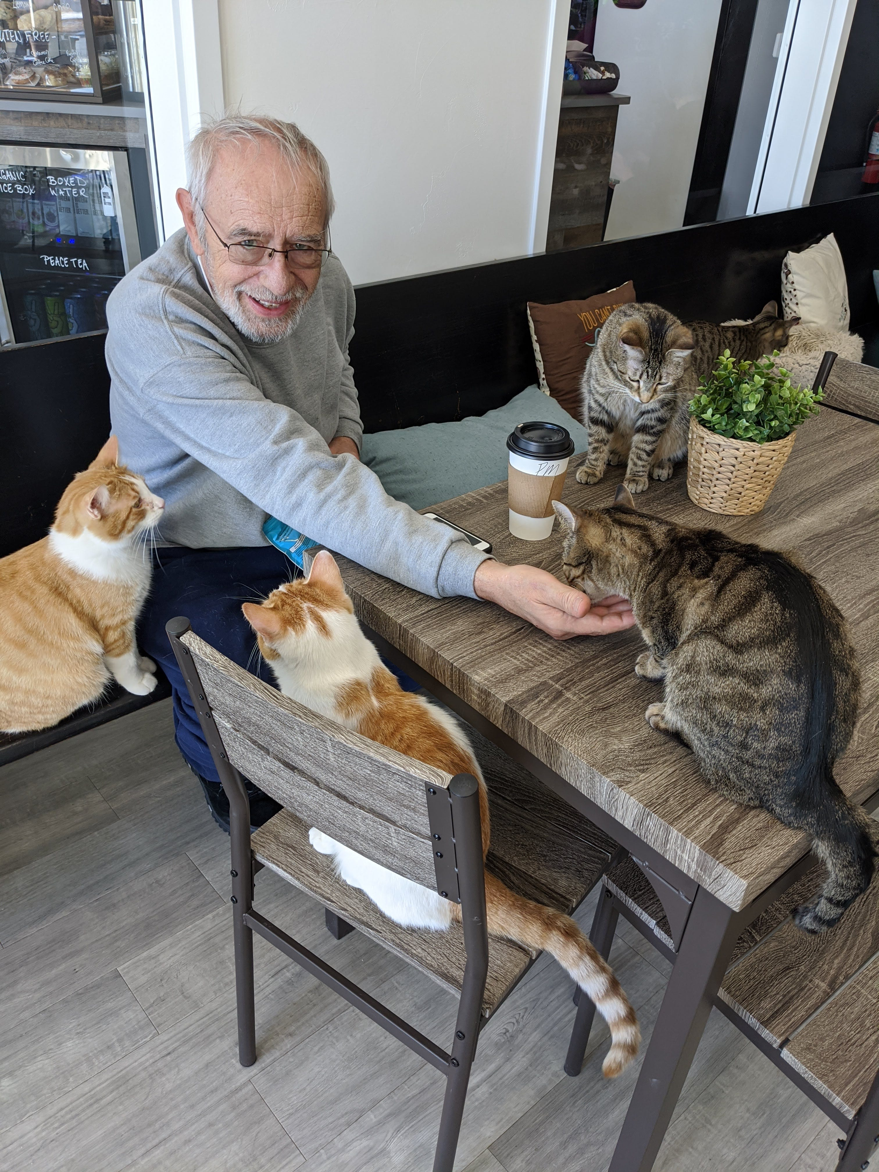 Volunteer Karl Schmidt in the cat lounge side of The Pawffee Shop Cat Café in Grand Chute.