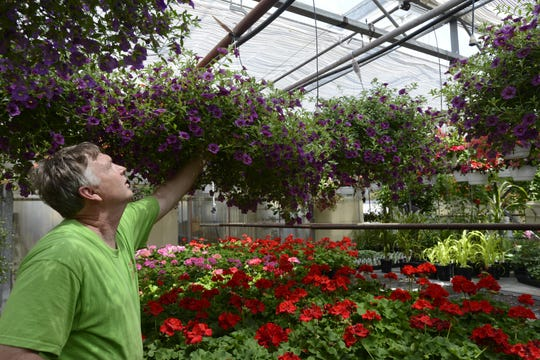 Bob Wistinghausen arranges a flowering hanging basket at Wistinghausen Florist and Greenhouse in Oak Harbor in 2015. He and Kim Wistinghausen decided to keep their business open this year despite the pandemic.