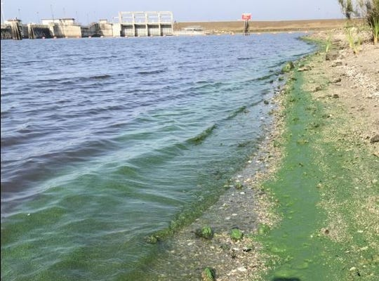 An apparent blue-green algae bloom stretches Tuesday, April 14, 2020, along the north shore of the basin just east of the Port Mayaca Lock and Dam.
