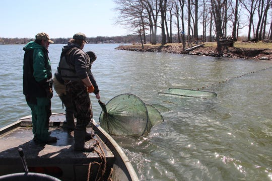Fisheries studies, including those that use fyke nets such as this one on Pewaukee Lake in 2014, have been suspended by the DNR in 2020 due to the coronavirus pandemic.