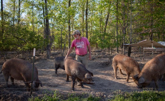 Cliff Davis of Pig & Leaf Farm in Summertown, Tenn., inspects his breeding stock of hogs on Friday, April 10, 2020.