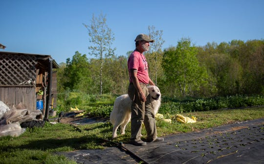 Cliff Davis of Pig & Leaf Farm in Summertown, Tenn., poses on the property with his Great Pyrenees, Yogi, on Friday, April 10, 2020.