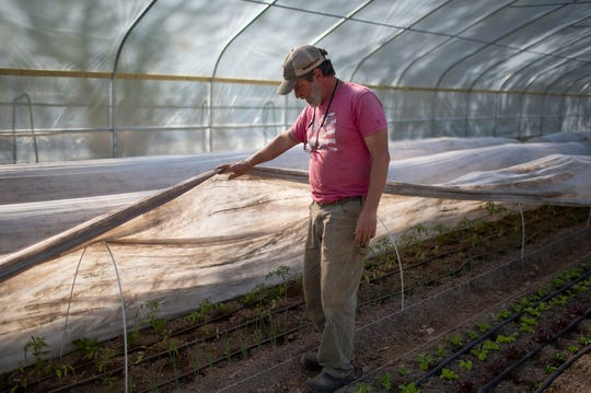 Cliff Davis of Pig & Leaf Farm in Summertown, Tenn., inspects tomato plants growing in a greenhouse at the farm on  Friday, April 10, 2020.