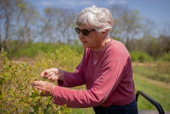 Deanna Naddy, the owner of Highland Realm, a blueberry farm in Hampshire, Tenn., inspects her blueberry plants on Monday, April 6, 2020.