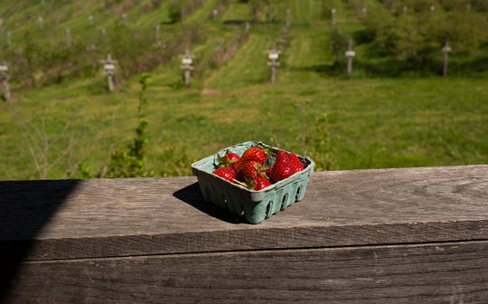 Freshly-picked strawberries sit on a balcony overlooking the Wagner Berry Farm in Spring Hill, Tenn., on Friday, April 10, 2020. The social distancing precautions will be in place when the farm opens to the public for strawberry picking on April 22.