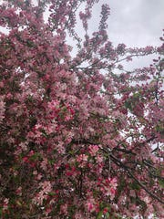 Reporter Leanna Smith spotted this flowering tree earlier this month.