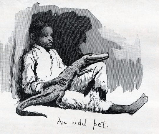 Boy With Alligator As Pet, Harpers Weekly 1890.