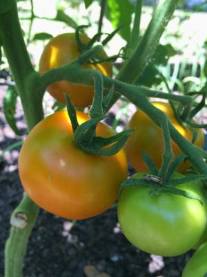 Become more self-sufficient by growing healthy fruits and vegetables in your backyard.