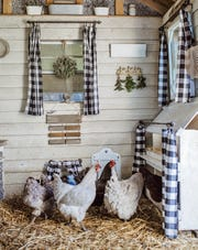 "Coops can look cute inside and outside; it just takes some creativity.  This is from ""DIY Chicken Keeping from Fresh Eggs Daily."""