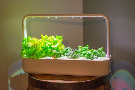 Indoor Garden Grow Lights Watering Systems Get Vegetables Growing