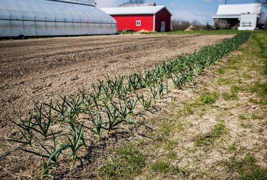 Shrock Family Farm in Selma Thursday, April 16, 2020.