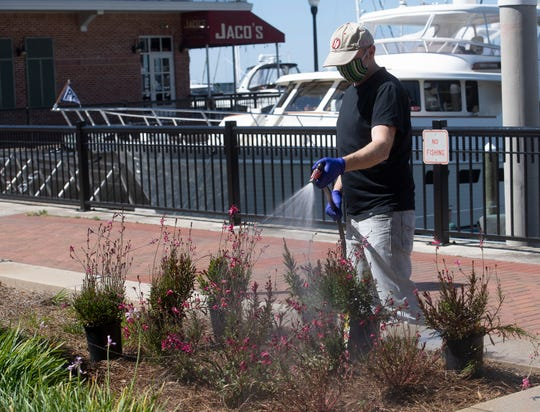 Wade Beroset works on a landscaping project at Jaco's Bayfront Bar and Grill on Thursday, April 16, 2020. Many of the employees at Jaco's are still on the payroll sprucing up and preparing for bayfront bar and grill for its eventual reopening after the lifting of the COVID-19 social distancing guidelines.
