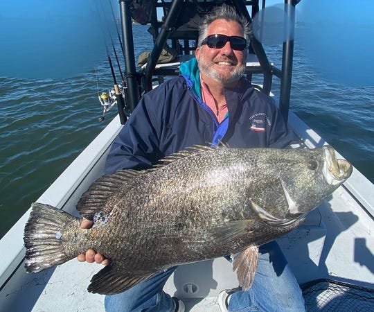 This 34-inch tripletail, which qualified as an IGFA World Length Record, but was not submitted, was caught last week on a channel marker with Capt. Glyn Austin of Going Coastal charters.