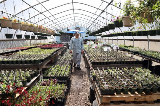 Ken Marsocci, co-owner and head grower at Shades of Green, in his greenhouse April 15, 2020 in Shrub Oak.