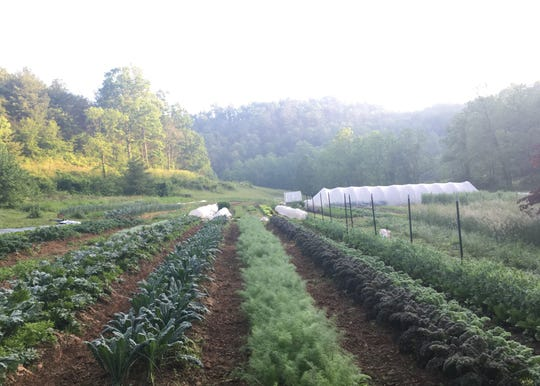 New Roots Market Garden