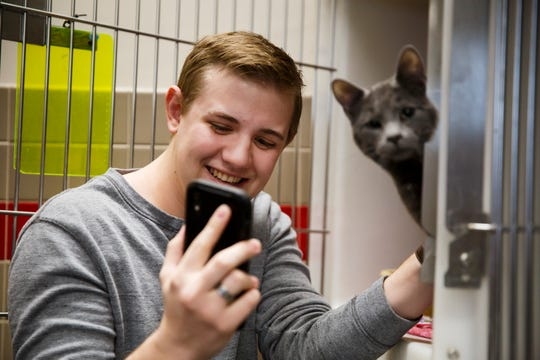 Adam Bohn, a sophomore Mechanical Engineering student at Iowa State, FaceTimes his girlfriend in the car as he plays with Aries, a 1.5 year old Domestic Shorthair, before adopting him from ARL on Thursday, April 16, 2020, in Ankeny. The ARL has limited the number of visitors per visit to limit possible exposure to COVID-19.