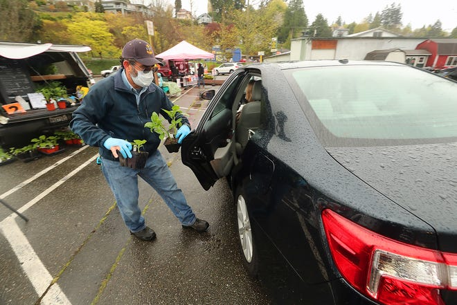 "Chris Moore opens the door of a vehicle to load purchased plants from his C Moore Starts booth during the season opener of the Port Orchard Farmers Market on Saturday. The market was a drive-in only and only featured vendors that were ""essential"" under Washington state's stay-at-home guidelines"