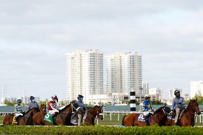 Gulfstream betting boyd gaming online sports betting
