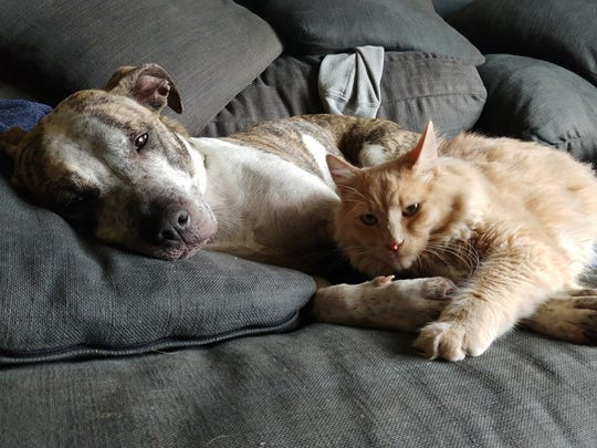 Salem-area animal shelter volunteers are fostering dogs and cats until they find a new home, including Rosie and her feline friend.