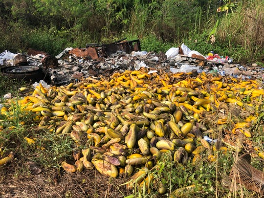 A ruined crop of eggplant and Japanese cucumber is shown on April 15, 2020, at the Reyes farm in Dededo.