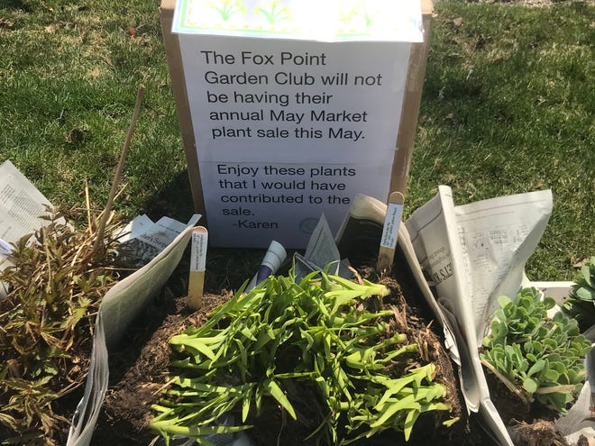 Some members of the Fox Point Garden Club are leaving the plants they would have contributed to the club's annual sale at the curb for free. The sale is among those canceled because of the coronavirus pandemic.