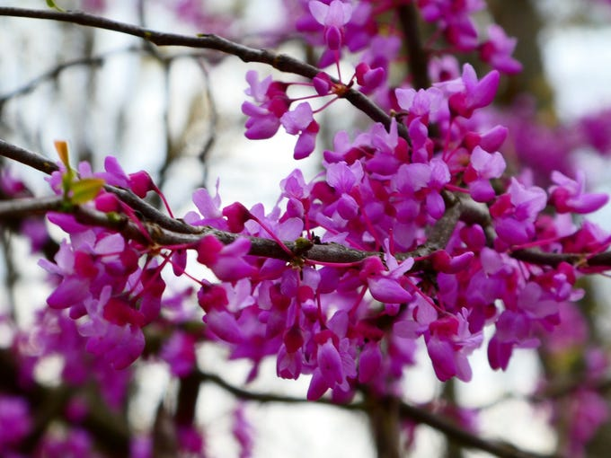 Amateur photographer Rachel McGregor wanted to share some of her captured moments of spring in the Ozarks.