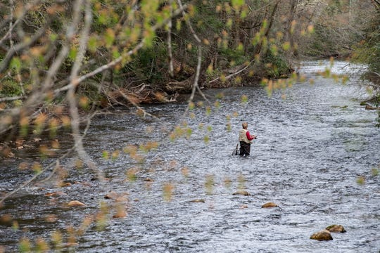 An angler fishes in the Davidson River in the PIsgah National Forest on April 7, 2020. Most of the forest is now closed to help slow the spread of COVID-19.