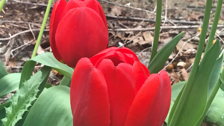 Dalton Farms Heartbroken After Authorities Order End To Tulip Tours