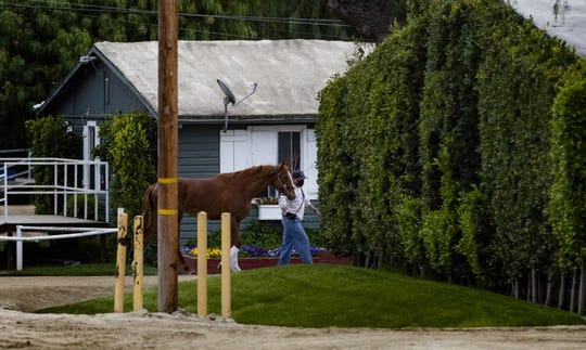 A racehorse is led back to its stable at Santa Anita, where horse racing has been shut down.