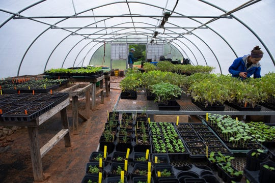 Alex Prusator (right) and James Parker work in the greenhouse at Bio-Way Farm in Ware Shoals Monday, April 20, 2020.