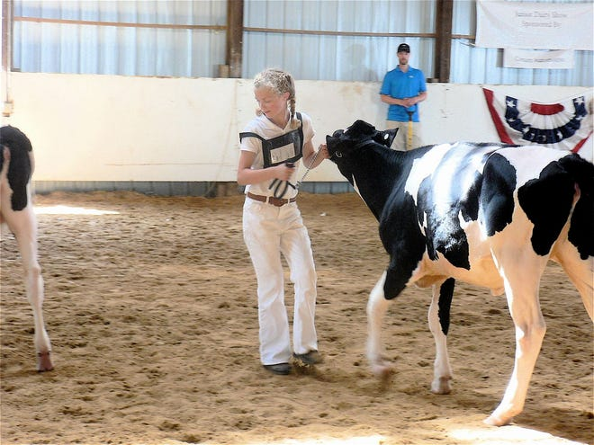 County fairs are the training ground for young cattle exhibitors, will they have a chance to show their calf?